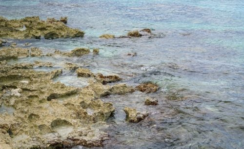 Shallow reefs for beachside snorkeling on the riviera maya