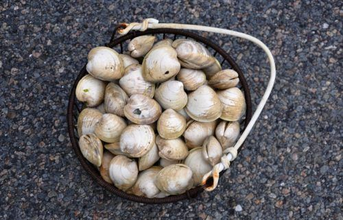 cape cod and clams go hand in hand
