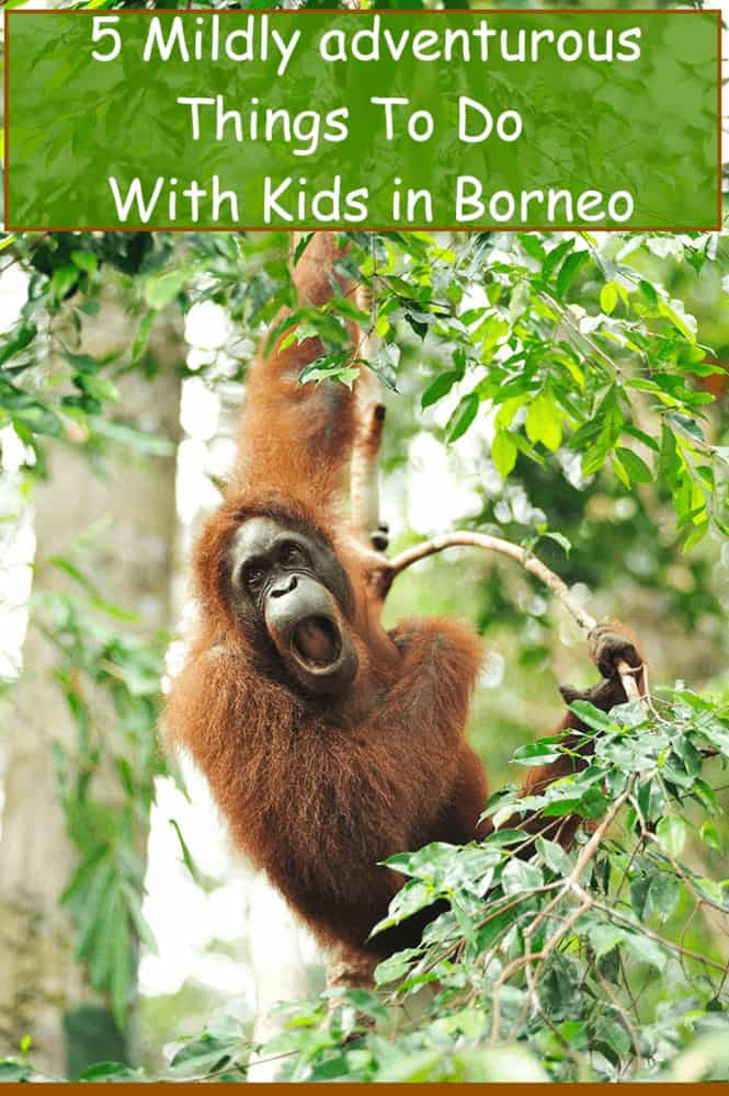 You travel to borneo, malaysia on vacation is to see fantastic wild animals and eat good food. Here are 5 things to do with kids while staying in kuching. #borneo #travel #kids