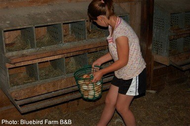 Collecting eggs is de rigueur on on farm stays