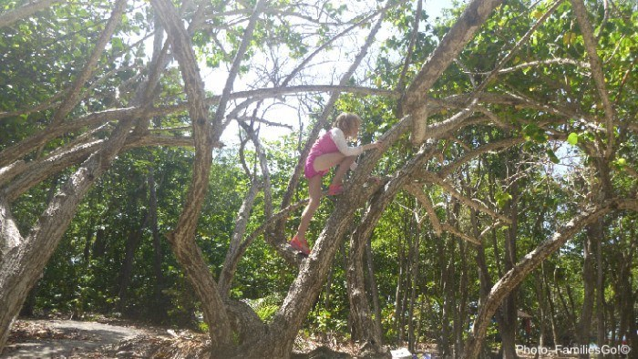 Isle gossier has great trees for climbing