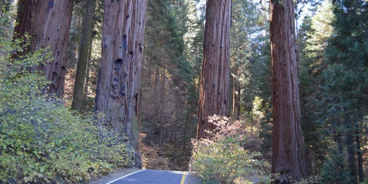 sequoia national park is full of natural wonders