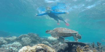 You might see turtles while snorkeling on the great barrier reef