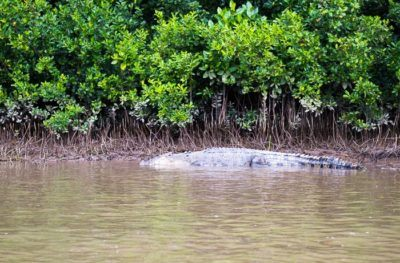 Crocodiles are easy to spot in australia
