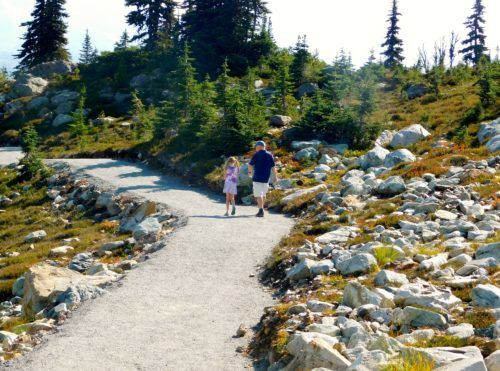 The top of whistler mountain has some easy hiking trails