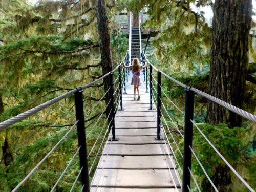 The not scary treetop trek from ziptrek