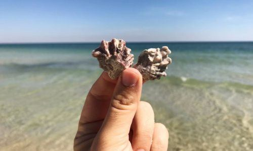 A person rubs two shells together on gulf shores beach