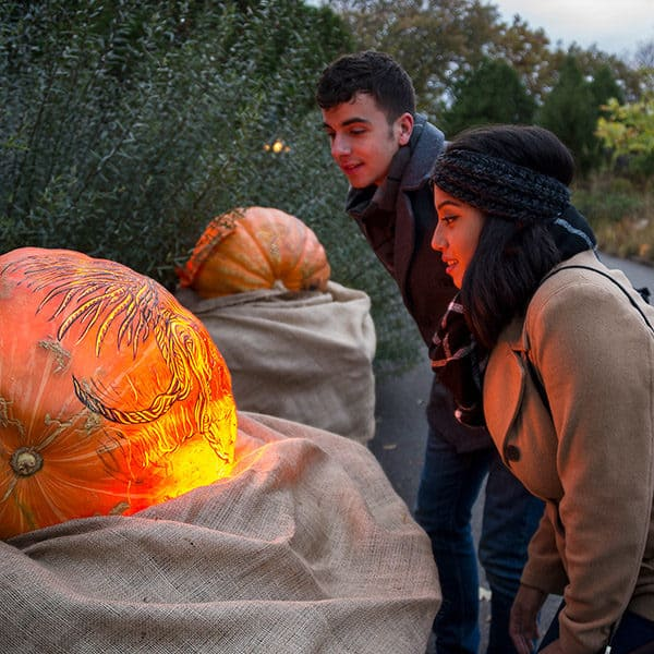 A young couple admires large pumpkins with elaborate scenes carved on them during the night of 1,000 pumpkins at the chicago botanic garden